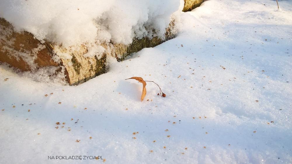 Jak przetrwać zimę